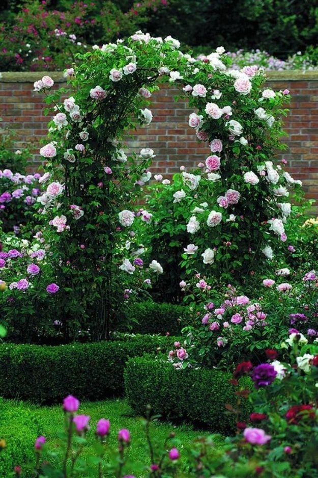 Забор и арки из живых растений