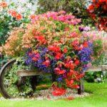 Контейнерный сад 8