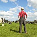 Рекомендации для начинающего фермера