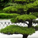 Преимущества использования хвойных растений при оформлении сада