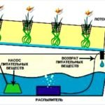 Оборудование для гидропоники: суть и преимущества метода и виды установок
