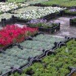 Садовый питомник – разнообразие качественного посадочного материала